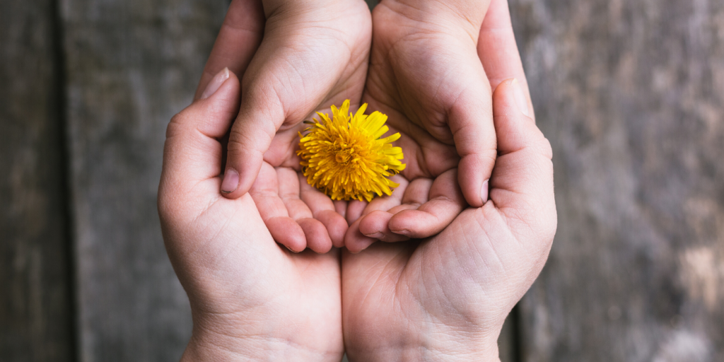 White adult hands cradle white child hands that are holding a dandelion